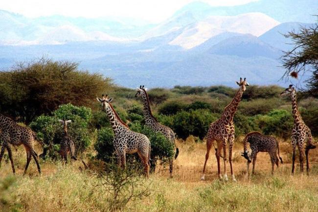 Южная Африка. Национальный парк «Южная Луангва»